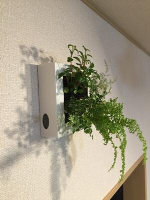 壁掛け観葉植物でおしゃれな部屋に!赤ちゃんがいても安心な、タイプ別おすすめ商品!